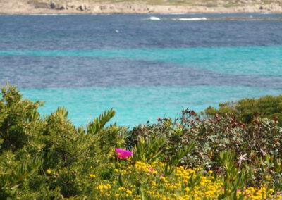 flore de printemps en bord de mer