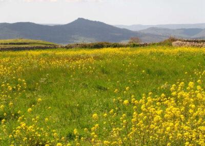 paysages de printemps en Sardaigne