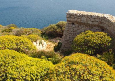 végétation de printemps en Sardaigne