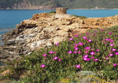 Sardaigne, tour aragonaise