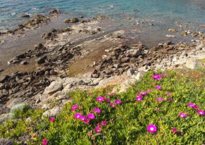littoral sarde au printemps
