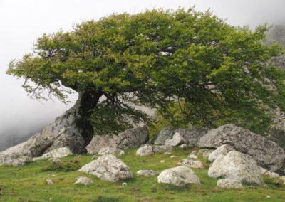 arbre figé par le vent