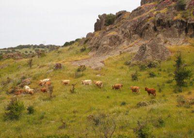 Sardaigne, Logudoro, Monte Gherra