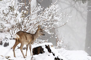 le QUEYRAS en hiver