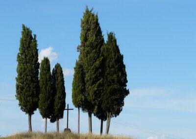 Portfolio Toscane, séjour du 17/06/2015